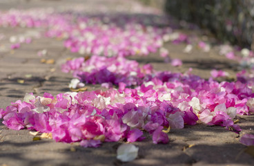 Pink flowers fall on the floor background