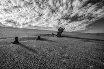 3 Wood in the Desert