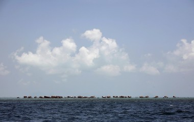 Neighbourhood of a sea gypsy community is seen in Sulawesi Sea in Malaysia's state of Sabah on Borneo island