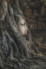 Head of Sandstone Buddha in The Tree Roots at Wat Mahathat, Ayutthaya, Thailand