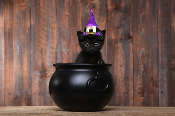 Adorable Black Halloween Witch Cat