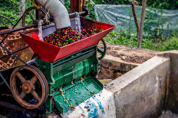 Coffee process - Selecting