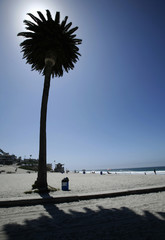 Palm tree is seen at Moonlight Beach in Encinitas following a week of triple-digit temperatures that lingered over parts of Southern California