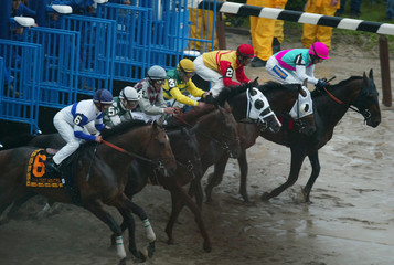 HORSES LEAVE STARTING GATE IN THE BELMONT STAKES.
