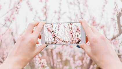 Female taking photo of blooming tree.