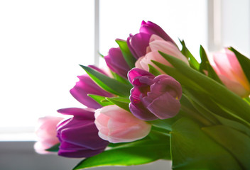 Flowers background, Violet and pink tulips near window, copy space