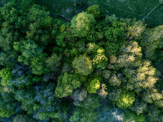 Aerial view of lush trees