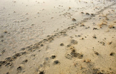 Wolves' footprints are seen in a forest near the abandoned village of Borshchevka