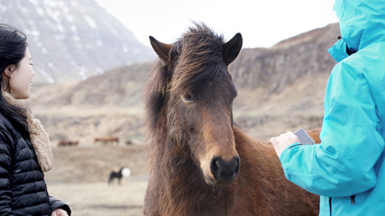 Asian tourists taking photo and playing with Icelandic horse