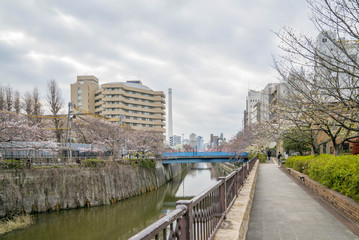Tokyo, Japan - April 3, 2017: Many people enjoy viewing cherry blossoms (sakura hanami) at Meguro River. Meguro River is the most famous place to enjoy cherry blossoms which is a Japanese custom.