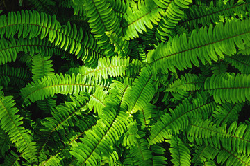 great green bush of fern with light and dark tone