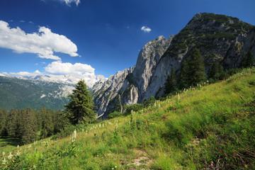 Almwiese bei Gosau mit Blick auf Dachstein