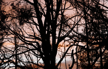 Burnt trees are silhouetted against the sunset as the Day Fire burns in the Los Padres National Forest in Ventura County