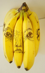 ARTIST AUAD'S BANANA DRAWINGS SHORT-LISTED FOR BECK'S FUTURES ART PRIZE SEEN ON SHOW IN LONDON.