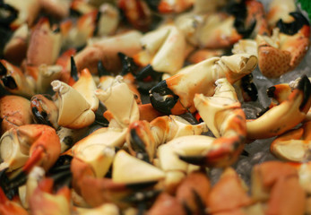 Cooked stone crab claws sit in a container at a factory in Marathon in the Florida Keys
