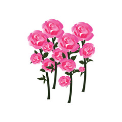 Tender Rose Blossoms with Stems as Fully Developed Flowers - in Balanced Hues of Red, Pink and White - Vector Isolated on White Background