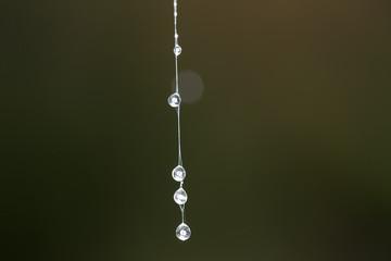 Dewdrops on a web thread