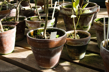 Potted plants in a hothouse