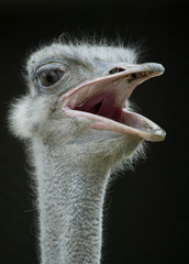 An ostrich stands inside a zoo in Lahore