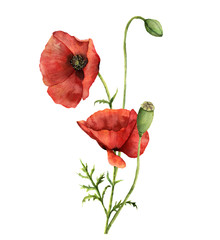 Watercolor poppies bouquet. Hand painted floral illustration with leaves, seed capsule and branches isolated on white background. For design, print and fabric