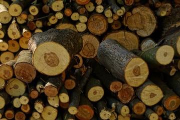 Текстура из круглых нарезанных на дрова брёвен деревьев