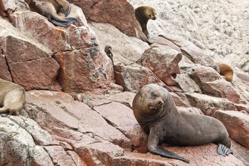 Perfect place to see a lot of birds,  sea lions and other mammals on the rocky islands. During a boat trip On a road trip through Peru I crossed The Ballestas Islands. Small islands near the town of P