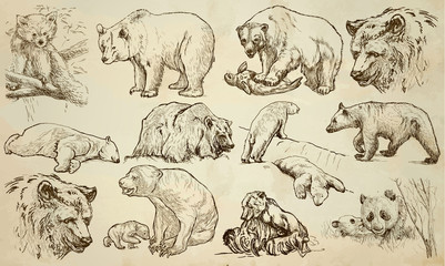BEARS - An hand drawn vector pack, line art