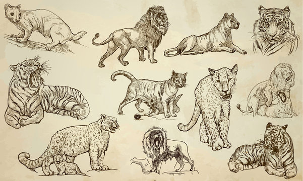 CATS - An hand drawn vector pack, line art