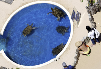 Tourists take picture of sea turtles at the TAMAR Project headquarters at Forte Beach in the Brazilian coastal state of Bahia