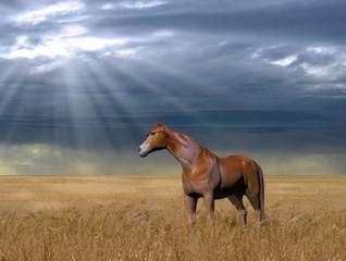 Horse in a Golden Wheat Field