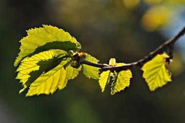 Wiosna w słońcu