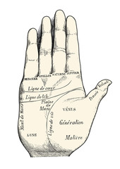 retro vector design element: vintage palm reading / chiromancy chart illustration, fortune lines displayed on a human hand