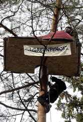 A Greenpeace activist climbs a tree to get to a tent while protesting against the construction of a highway near Augustow northern-eastern Poland