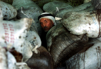 A Palestinian farmer sits between bags of olives at the Abu Qishtah refinery, in the Rafah refugee c..