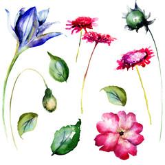 Set of decorative wild flowers