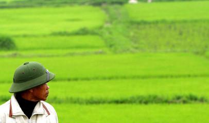 A Vietnamese farmer looks at his rice field outside Hanoi.
