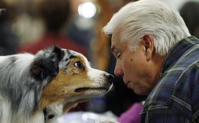 Spooner, an Australian shepherd, eyes Frank Cross at the National Dog Show in Oaks