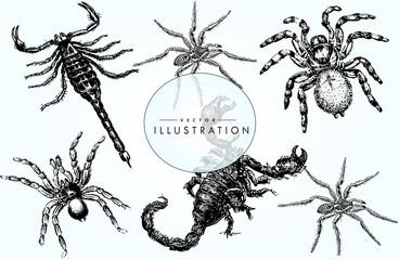 Poisonous arachnids - sketch, set