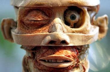 A plastinated human specimen twinkling his eye is seen at Gunther von Hagen's exhibition, Koerperwel..