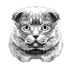 Door stickers Hand drawn Sketch of animals cat breed British lop-eared head thick symmetrical sketch vector graphics black and white drawing