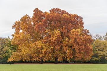Photo sur Aluminium Rouge mauve Park in Margaret Island, Budapest, Hungary. Autumn Tree