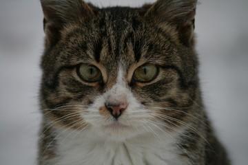 Striped series cat