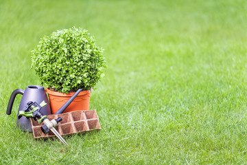 gardening tools and tree in a pot on a grass in the garden with empty copy space for your text. outdoor summer hobby, topiary art, horticulture, garden service and design concept