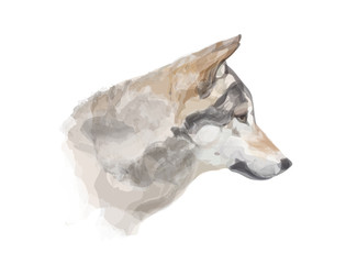 Vector illustration of wolf's head with watercolor effect isolated on white background