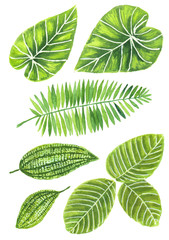 Set of various tropical leaves painted in watercolor. Elements for design.