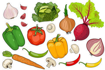 white background cut vegetables. vector illustration of high quality.