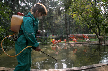 A veterinary worker sprays a disinfectant solution in the flamingos' enclosure at the Bucharest Zoo