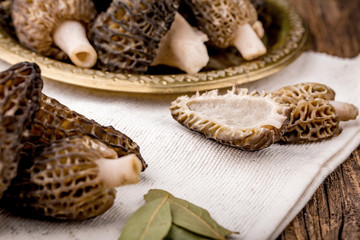 Fresh morchella conica, seasonal mushrooms
