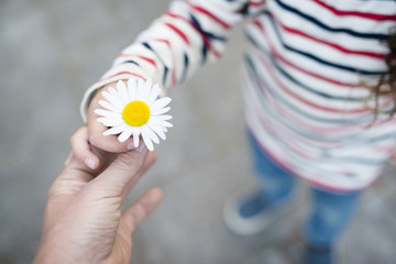 白い花を手渡す親子の手