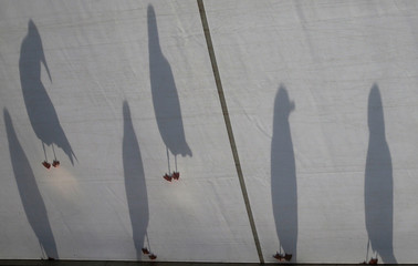 FILE PHOTO - Seagulls cast shadows on the roof of the media centre during the third round of the British Open golf championship on the Old Course in St. Andrews, Scotland